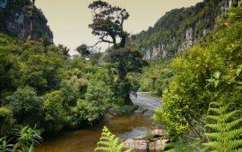 New Zealand Forest - The Possum Problem - Possum Merino