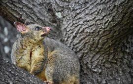 Why is Possum Fur so warm